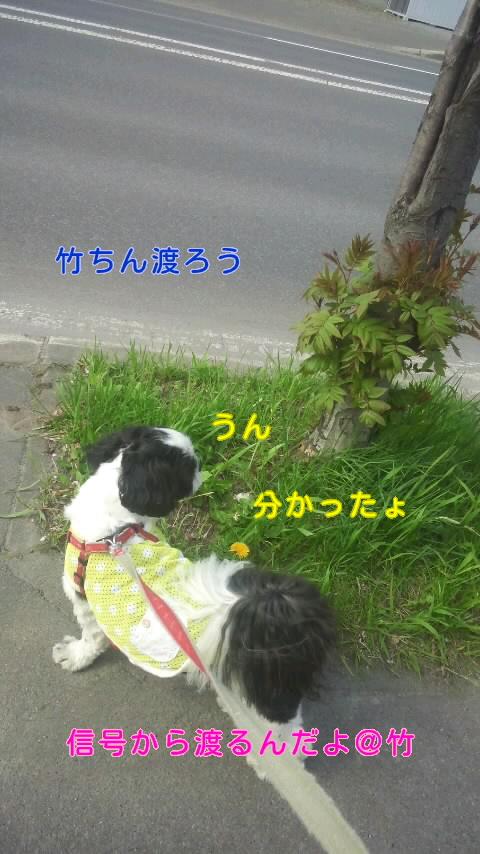 moblog_ca606467.jpg
