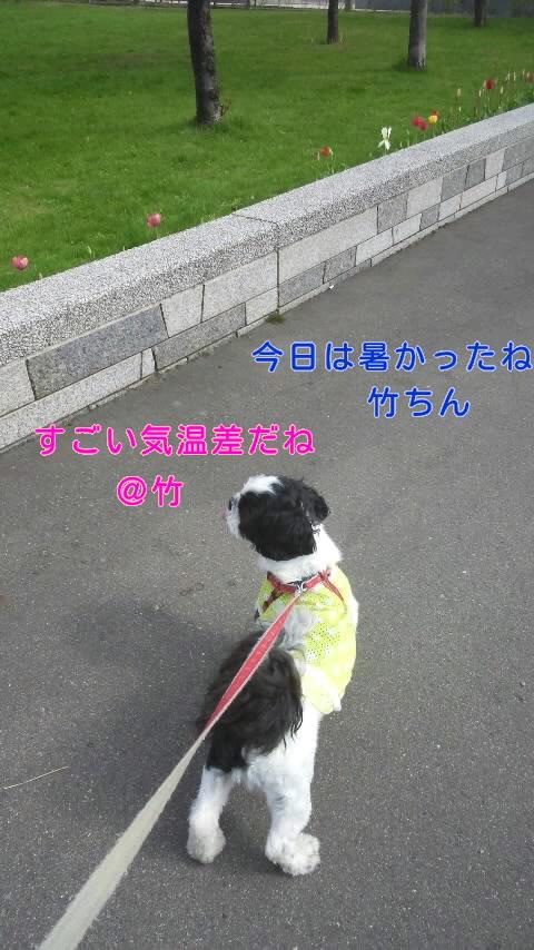 moblog_e2eac4c3.jpg