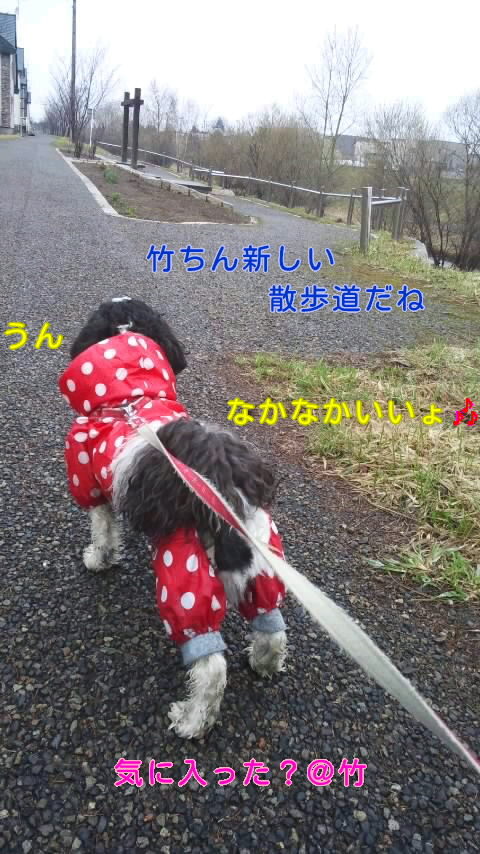 moblog_fcc8e684.jpg