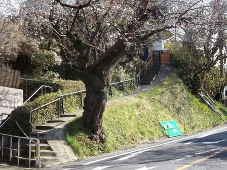 S鎌倉山DSCF3649