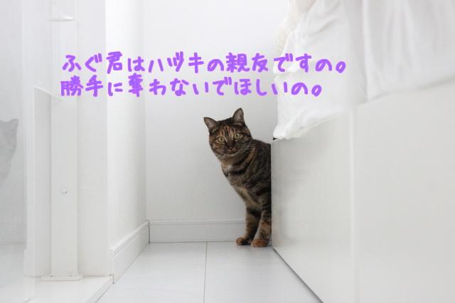 41ZlSNeJPtJck0c1477354082_1477354154.jpg