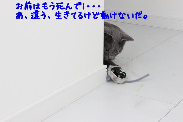 B1NM3B013InrQRQ1464066694_1464066780.jpg