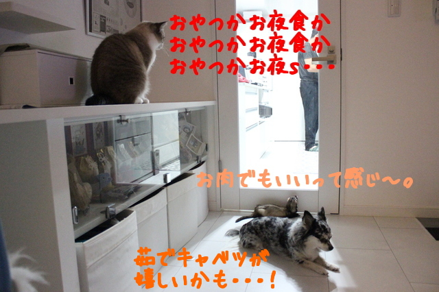 EtKU8_uOfJYRFuu1476752619_1476752764.jpg