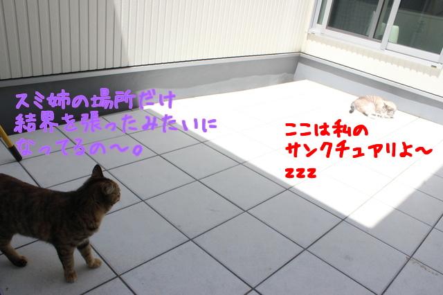 QaQ3xmrgDuomR4x1463024816_1463025079.jpg