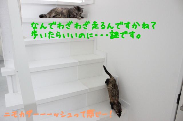 R0cK0u3mGD72dmv1475890073_1475890157.jpg