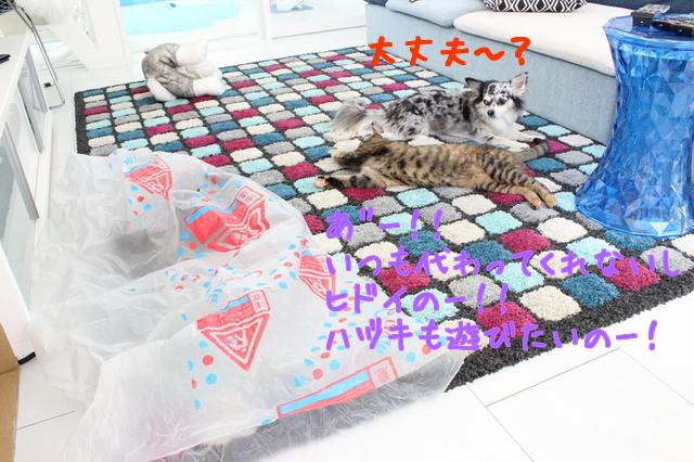 SKXp7zKsNYtvMTn1469880240_1469880331.jpg