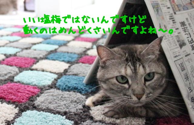 jpNx3kLOMmfNRG91475827267_1475827387.jpg