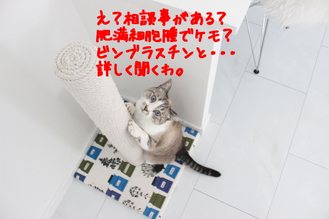 mJ4MgfJfJjPnpK71476836099_1476836528.jpg