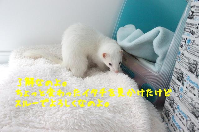 mpcCXcRKP0WAnsl1468718747_1468718800.jpg