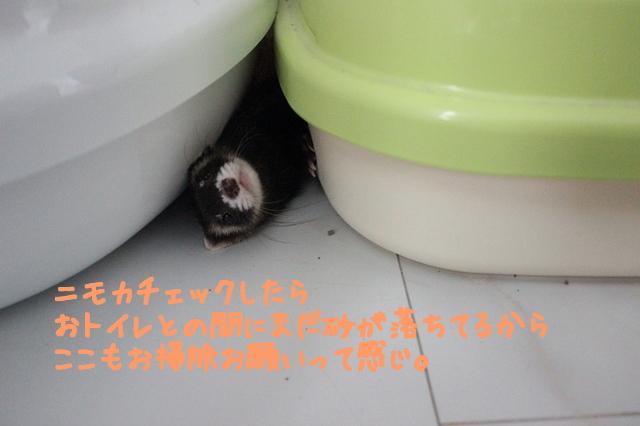 rDKk1mTgiXeLAUq1474932618_1474932715.jpg