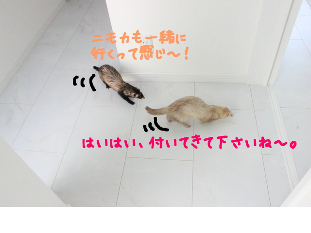 snap_naxtukokedesu_2016611332.jpg
