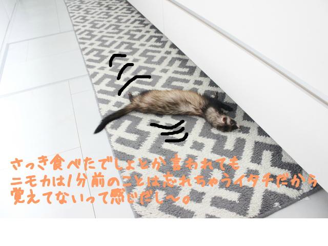 snap_naxtukokedesu_201664121942.jpg