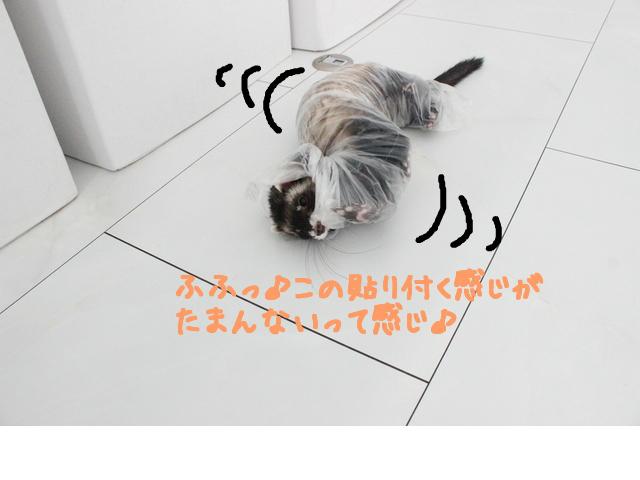 snap_naxtukokedesu_201665184253.jpg