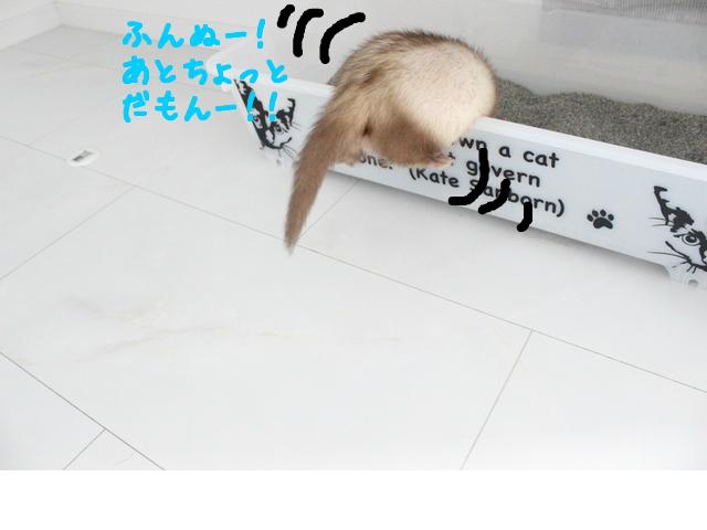 snap_naxtukokedesu_20167492421.jpg