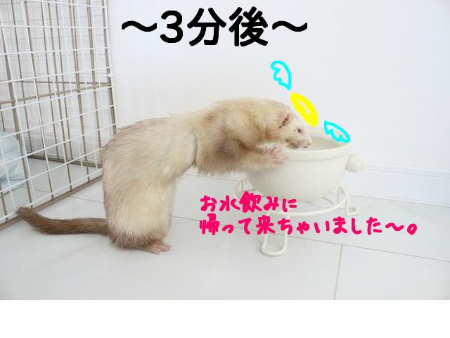 snap_naxtukokedesu_201692104011.jpg
