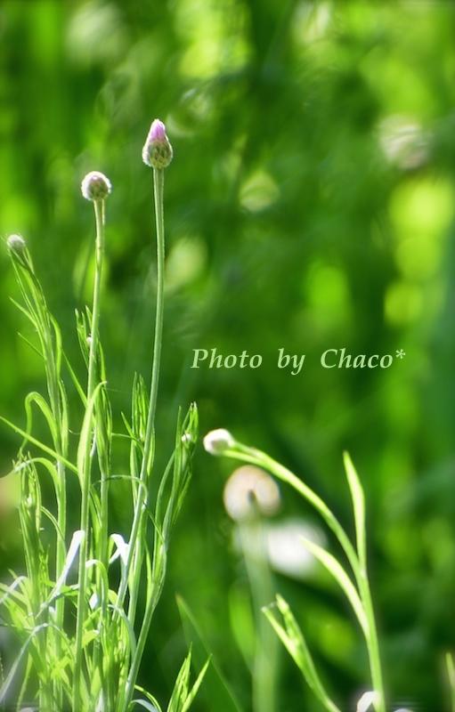野に咲く花たち