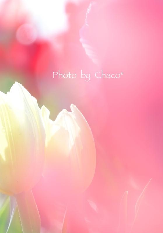Smile...tulip