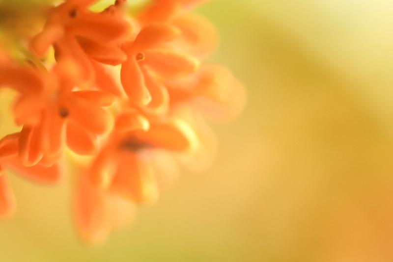香りの記憶
