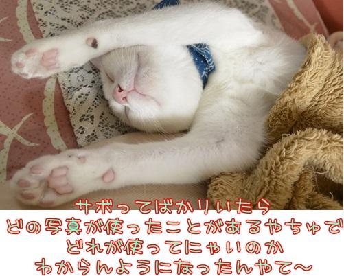 _DSC5956_20160528232151742.jpg