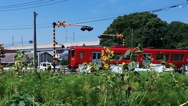 220k-himawari1.jpg