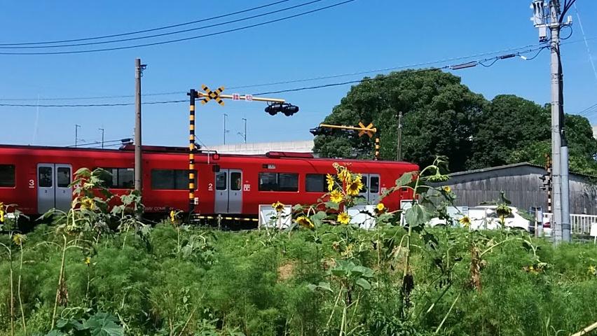 220k-himawari2.jpg
