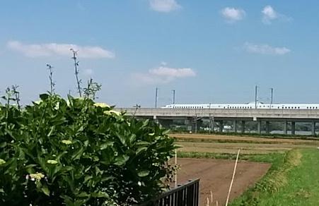 ajisai-shinkansen3.jpg
