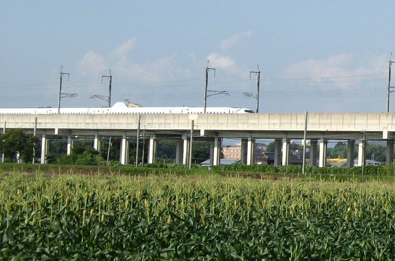 corn-shinkansen800x529.jpg