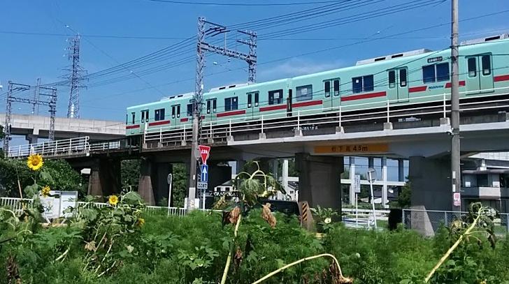 nishitetsu-himawari2.jpg