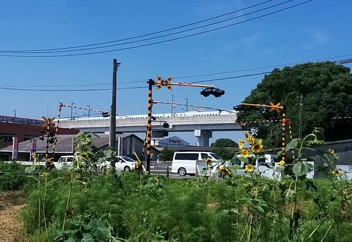 shinkansen-himawari.jpg