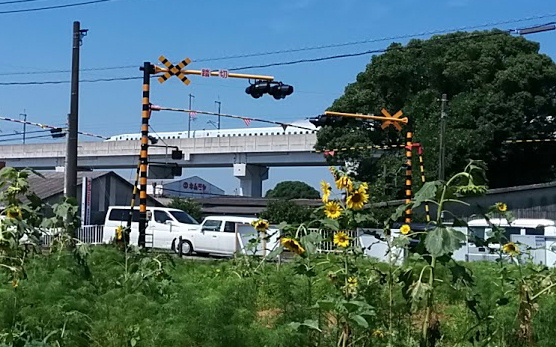 shinkansen-himawari2.jpg
