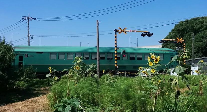 yufuin-hamawari2.jpg