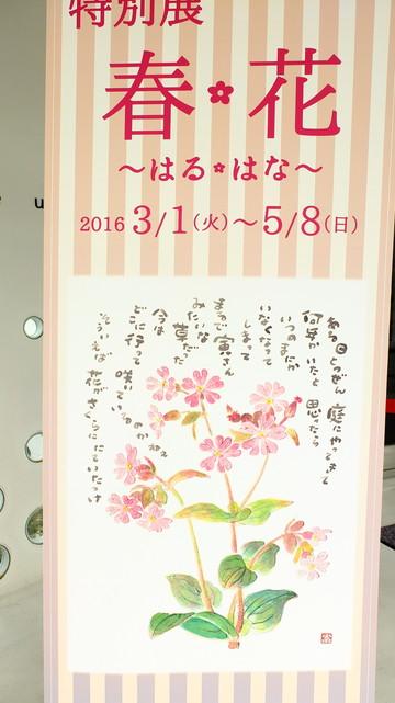 20160515__nestsspaceblog_watarase_4.JPG