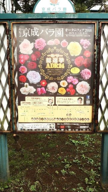 20161016_nestsspaceblog_keiseirose_1.JPG