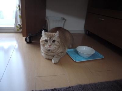 先住猫、レオン君