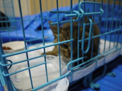 猫屋敷 4番ちゃん