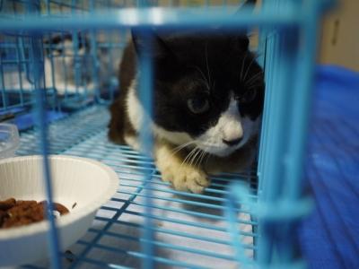 猫屋敷 3番ちゃん