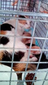 手術翌日のママと子猫達