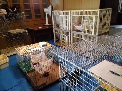 三つ目の猫部屋①