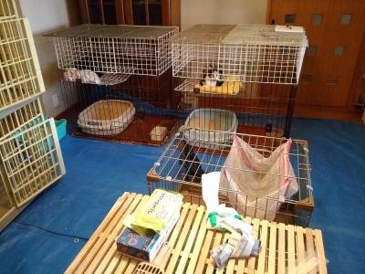 三つ目の猫部屋②