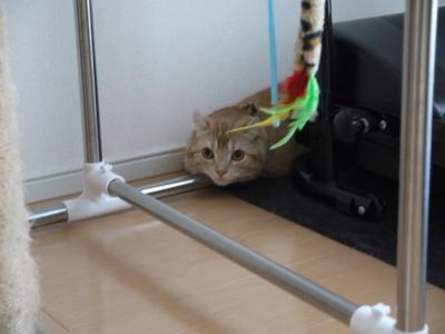 先住猫のレオン君