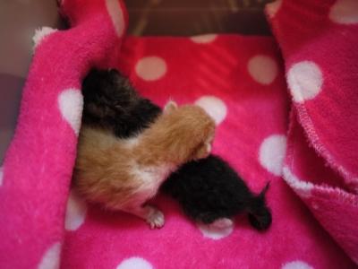 捕獲器の中で生まれた子猫達