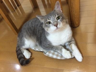 幸せベージュちゃん③