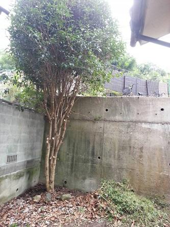 柴田邸草刈り9-3すっきり