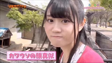 リスアニ!TV 小倉唯のハイタッチ☆カワウソ