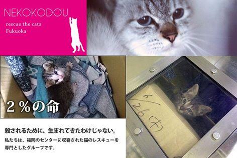 fc2blog_20160727163017e26.jpg