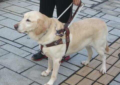 盲導犬「汚れる」と乗車拒否