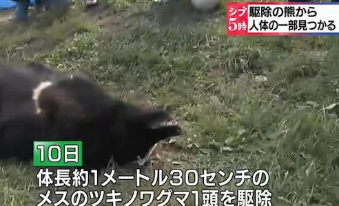 駆除したクマから人体の一部 秋田・鹿角