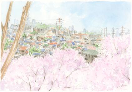大倉山_桜