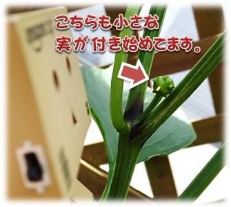 20160529_008.jpg