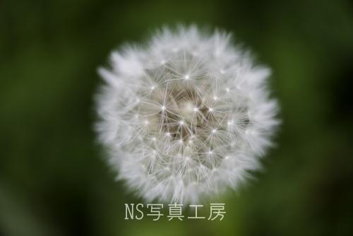 _DSC1916.jpg